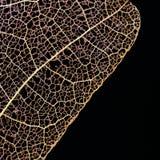 Suszę naciskał liść na czarnym tle Fotografia Royalty Free