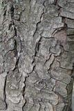 Suszę pękał barkentynę koński kasztan Zdjęcie Royalty Free