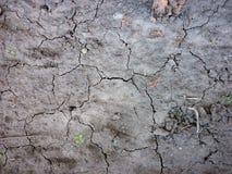 Suszę pękał popielatego ziemskiego tło, brudna tekstura obraz royalty free