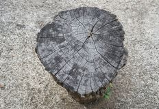 Suszę siekał drzewną belę fotografia royalty free