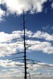 Suszę w górę drzewa Fotografia Stock