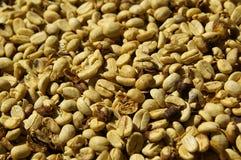 susząca fasoli kawa Fotografia Stock