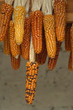 Suszarnicza kukurydza Gwatemala Zdjęcie Stock