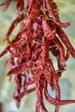 Suszarniczy chillies w Agriturismo w Basilicata, Włochy Zdjęcia Stock