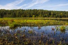 Suszarniczy jezioro w Europa Obrazy Stock