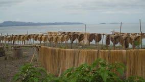 Suszarniczy palmowi włókna zdjęcia royalty free