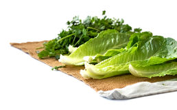 Suszarniczy warzywa Obraz Stock