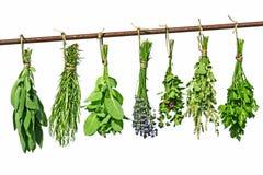 suszarniczy ziele zdjęcie stock