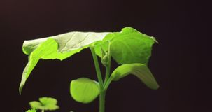 Suszarniczy zielonej trawy czasu upływ, żadny deszcz, żadny woda, żadny życie, umierać natura, suszy pojęcie, globalny nagrzanie, zbiory