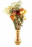 suszone kwiatki Obrazy Royalty Free