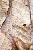 suszone liści, Fotografia Stock