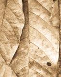 suszone liści, Zdjęcie Stock