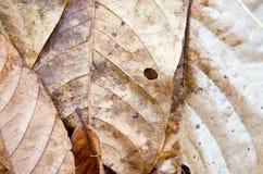 suszone liści, Zdjęcia Stock