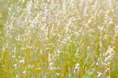 suszone pola roślin Obrazy Royalty Free