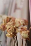 suszone róże Obraz Royalty Free