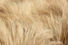 suszone trawy Obraz Stock