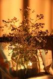 suszone zioła Fotografia Royalty Free