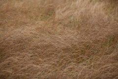 Suszy brown trawy w jesieni pola zbliżeniu Zdjęcia Stock