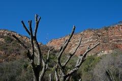 SUSZY gałąź NIEŻYWY drzewo W parku Z WYSOKIMI wzgórzami zdjęcia stock