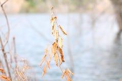 Suszy gałąź z liśćmi obraz stock