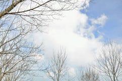 Suszy gałęziastego drzewa Zdjęcia Royalty Free