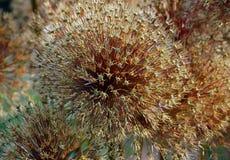 Suszy kwiatu fotografia stock