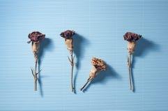 Suszy kwiatu Na błękicie Zdjęcia Stock