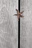 Suszy kwiatu na starym drewnianym tle Zdjęcie Royalty Free