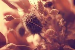 Suszy kwiatu tło Zdjęcie Royalty Free