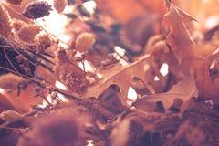 Suszy kwiatu tło Zdjęcie Stock