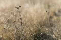 Suszy kwiatu w polu w lekkim dniu Zdjęcia Royalty Free