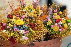 Suszy kwiaty Obraz Stock