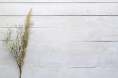 Suszy kwiaty na białym drewnianym tle, tapeta Zdjęcia Stock