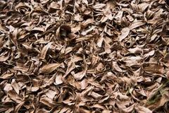 suszy liść zdjęcie stock