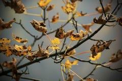 suszy liść Zdjęcie Royalty Free