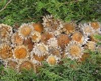 suszy liść rośliny Obrazy Royalty Free