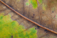 Suszy liście i zielenieje liścia tła teksturę Zdjęcia Stock