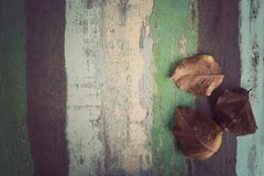 Suszy liście na Drewnianym materialnym tle dla rocznik tapety zdjęcie stock