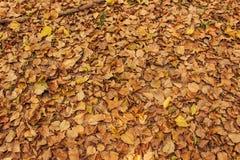 Suszy liście na ziemi dla tła Obraz Royalty Free