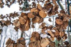 Suszy liście w zima lesie obrazy stock