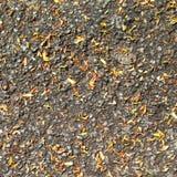 Suszy liście na asfaltowej drogi tle zdjęcie royalty free