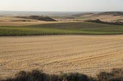Suszy pole w Hiszpańskiej wiosce, sucha trawa, kolor żółty zdjęcia royalty free