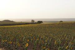 Suszy pole w Hiszpańskiej wiosce, sucha trawa, słoneczniki zdjęcie stock