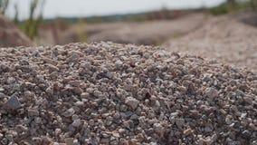 Suszy pustynnego skalistego cynaderki zbliżenie Atmosfera martwota zdjęcie wideo