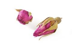 Suszy różanego na bielu Zdjęcia Stock