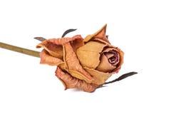 Suszy Różanego Zdjęcie Stock