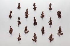 Suszy rośliny i liście na białym tle Mieszkanie nieatutowy Natura fotografia stock