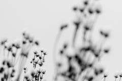 Suszy rośliny w śniegu Fotografia Royalty Free