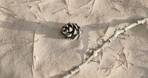 Suszy rożek i rozgałęzia się na piasku zbiory