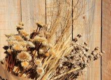 suszy rośliny drewno Obrazy Royalty Free